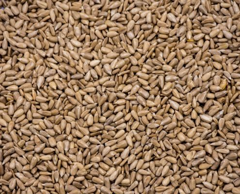 Hulled Sunflower Kernels Bakery Grade Premium