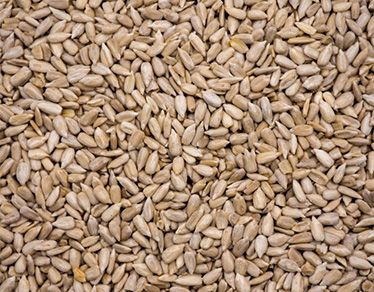 Hulled Sunflower Kernels Confectionery