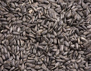 Sunflower Seeds High oleic