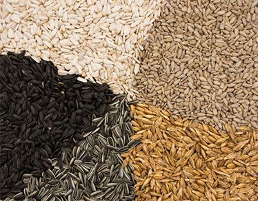 organic sunflower seeds and kernels